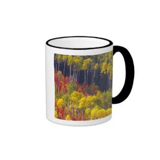 Colorful aspens in Logan Canyon Utah in the Coffee Mug