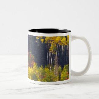 Colorful aspens in Logan Canyon Utah in the Mug