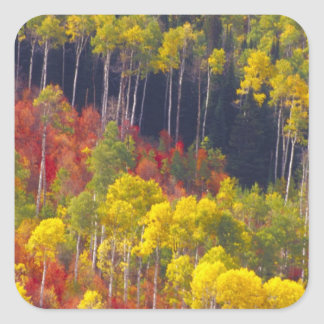Colorful aspens in Logan Canyon Utah in the Stickers