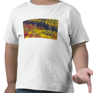 Colorful aspens in Logan Canyon Utah in the T-shirts
