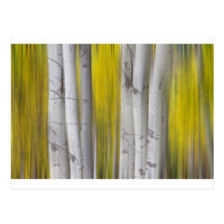 Colorful Autumn Aspen Tree Colonies Dreaming Postcard