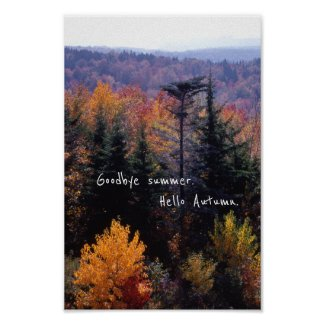 Colorful Autumn, Forest of Trees Fall Landscape Poster