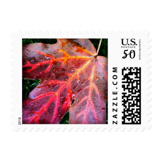 Colorful Autumn Leaf / Fall Leaves Postage Stamps