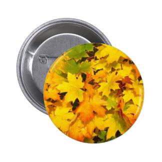 Colorful autumn leafs pinback button