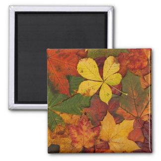 Colorful Autumn Leaves 2 Inch Square Magnet