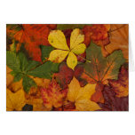 Colorful Autumn Leaves Card