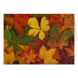 Colorful Autumn Leaves Card