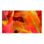 Colorful Autumn Leaves Close-up Double-Sided Standard Business Cards (Pack Of 100)