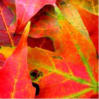 Colorful Autumn Leaves Close-up Statuette