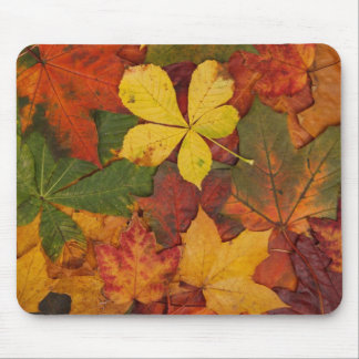 Colorful Autumn Leaves Mousepad