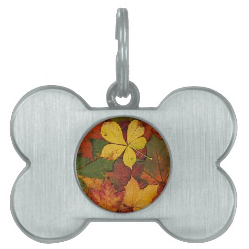 Colorful Autumn Leaves Pet Name Tags