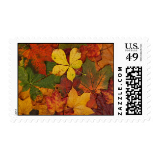Colorful Autumn Leaves Postage Stamp