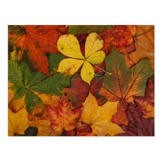 Colorful Autumn Leaves Postcard