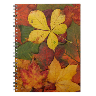 Colorful Autumn Leaves Spiral Note Book