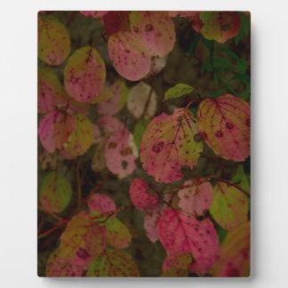 Colorful Autumn Plaque