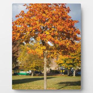 Colorful Autumn Tree Plaque