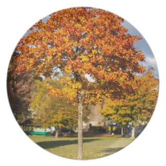 Colorful Autumn Tree Party Plates