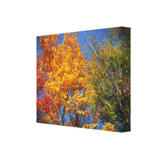 Colorful Autumn Trees Canvas Print