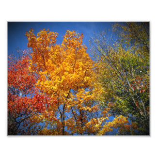 Colorful Autumn Trees Photo Print