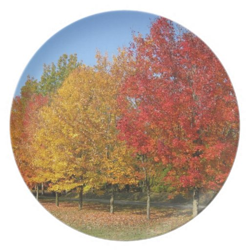 Colorful Autumn Trees Plates