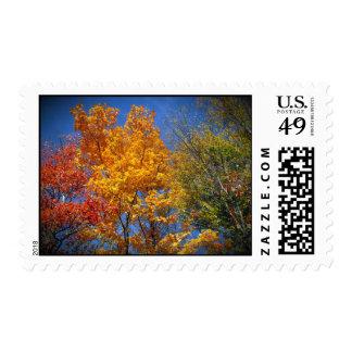 Colorful Autumn Trees Postage