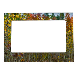 COLORFUL AUTUMN WOODLAND SCENE MAGNETIC PICTURE FR MAGNETIC PHOTO FRAME