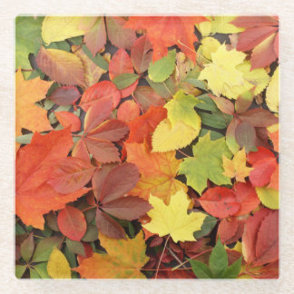 Colorful Background Of Fallen Autumn Leaves Glass Coaster