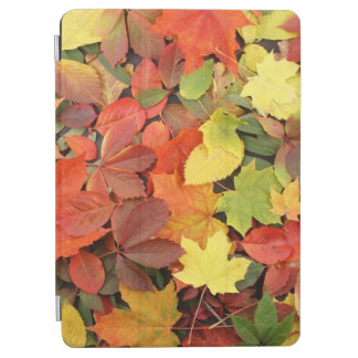 Colorful Background Of Fallen Autumn Leaves iPad Air Cover