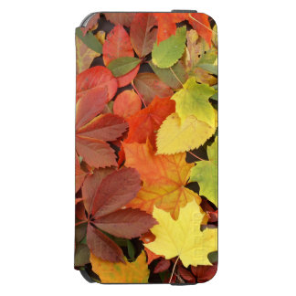 Colorful Background Of Fallen Autumn Leaves iPhone 6/6s Wallet Case