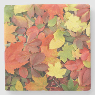 Colorful Background Of Fallen Autumn Leaves Stone Coaster