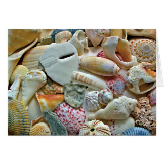 Colorful Beach Shells Blank Note Stationery Note Card
