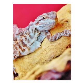 Colorful Bearded Dragon Postcard