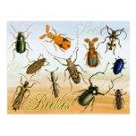 Colorful Beetles Post Card