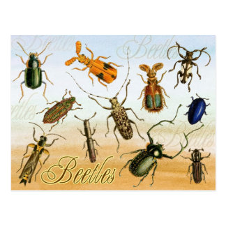 Colorful Beetles Post Card