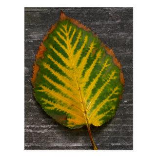 Colorful Birch Leaf Postcard