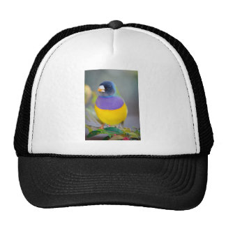 Colorful Bird Trucker Hat