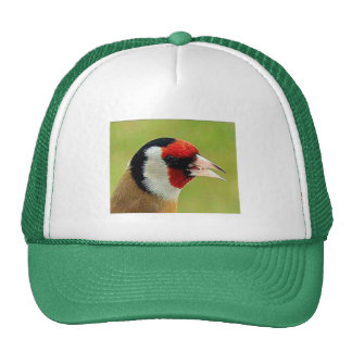 Colorful Bird - Hat
