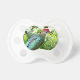 Colorful bird head turned on post pacifier