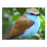 Colorful bird photo print