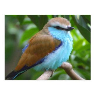 Colorful bird postcard