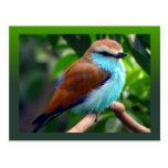 Colorful Bird Postcard at Zazzle