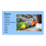 COLORFUL BIRDS Double-Sided STANDARD BUSINESS CARDS (Pack OF 100)