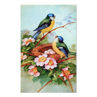 Colorful Birds in Springtime Poster