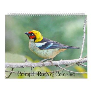 Colorful Birds of Colombia Wall Calendar