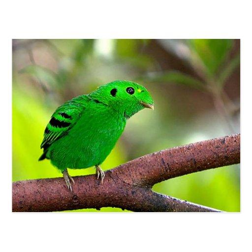 Colorful Birds Postcard