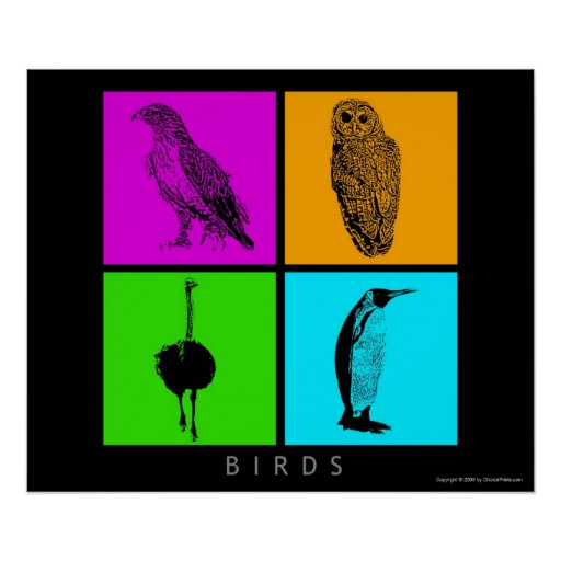 Colorful Birds Poster