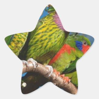Colorful Birds Star Sticker