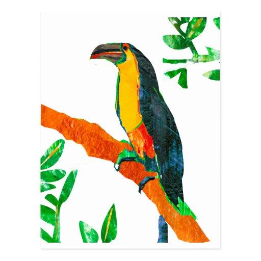 Colorful  Birds Toucan Postcard