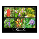 Colorful blooms in Florida Post Card