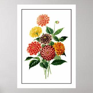 Colorful Botanical Flowers Illustration Poster